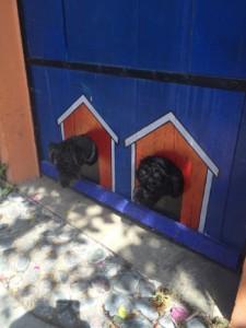 Cozumel Doggie Doors - Photo Courtesy of Glory Gallo