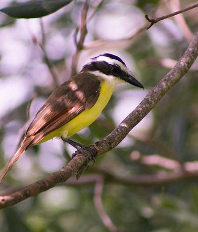 Cozumel Birding