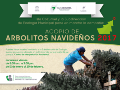 Cozumel Residents Urged to Recycle Christmas Trees