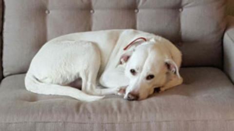 Cozumel Dog Adoption
