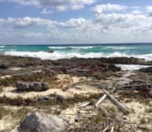 Beach Clean Up Cozumel