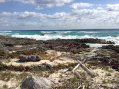 Beach Clean Up Cozumel