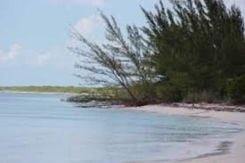 Cozumel Sea Pine