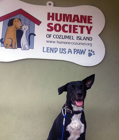 Cozumel Dog Rescue