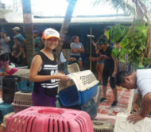 Humane Society of Cozumel Island Volunteer Program