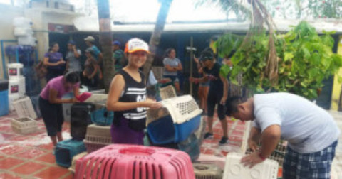 Humane Society of Cozumel Island Volunteer Program