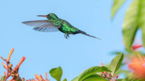 Festival Colibri Esmeralda