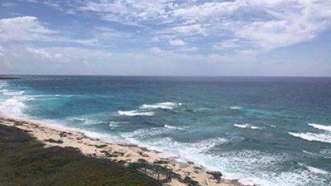 New Coral Reefs Veracruz Mexico