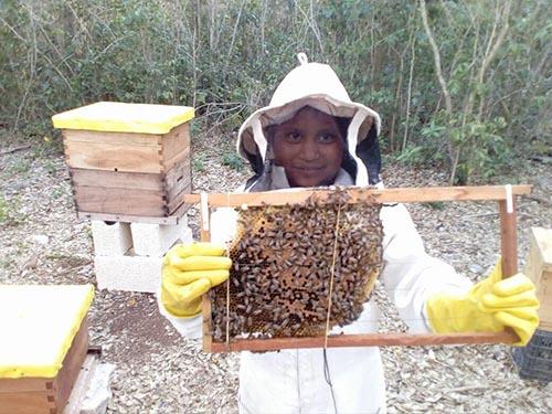 Bees Cozumel