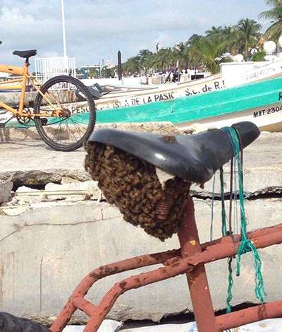 Cozumel Protecting Bees