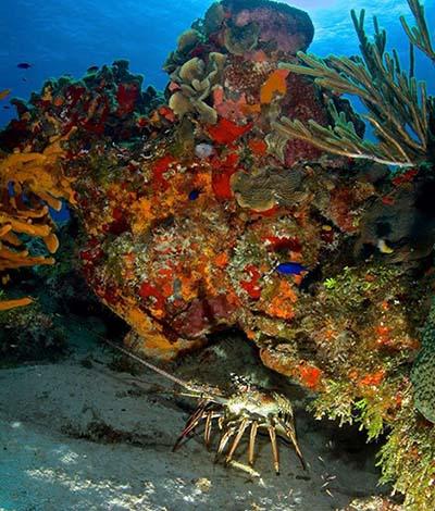 Cozumel Lobster