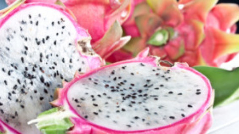 Pitaya Season