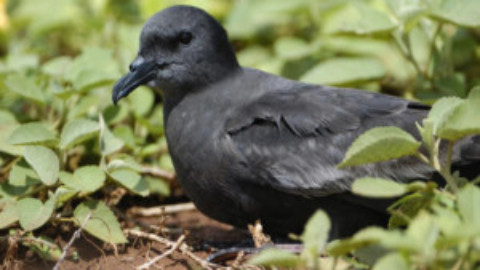 Cozumel Birds