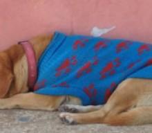 Cozumel Town Dog Lola