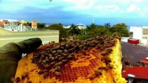 Bee Cozumel