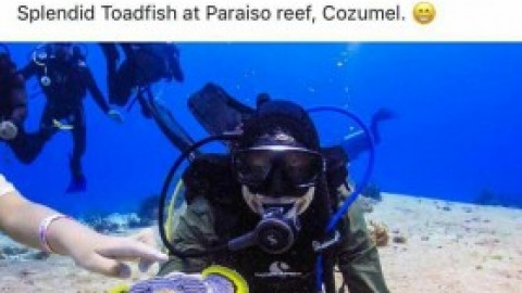 Cozumel 4 You Social Media