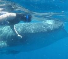 Whale Shark Tour Cozumel