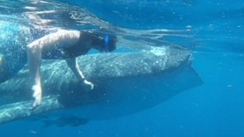 Whale Shark Tour Cozumel