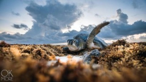 2018 Turtle Season Update