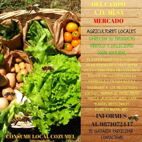 Local Cozumel Farmer's Market Started