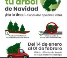Recycle Cozumel Christmas Trees
