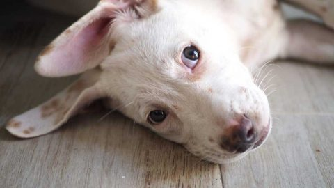 Humane Society Cozumel Pet Foster