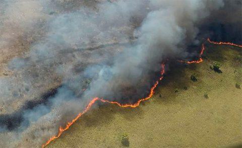 Sian Ka'an Forest Fire