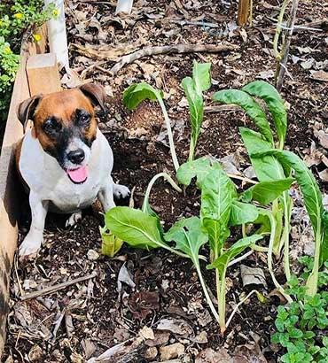 Cozumel Garden Lily Xacur