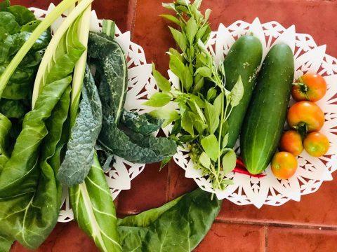 Gardening Cozumel