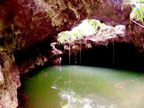 Cozumel Cenotes