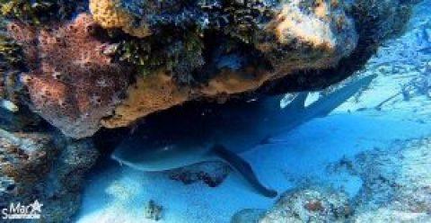 Sharks Yucatan