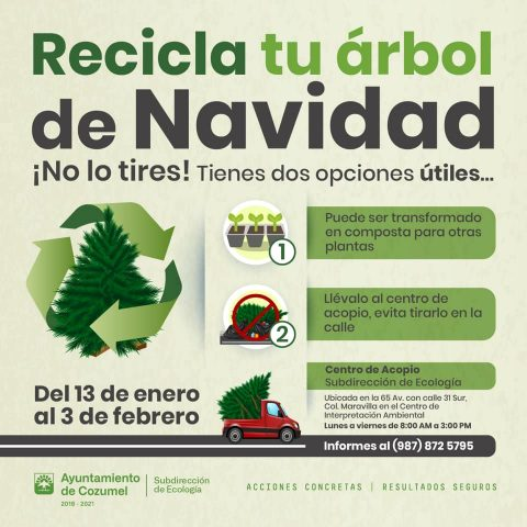 Recycle Christmas Trees Cozumel