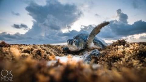2018 Turtle Season Update
