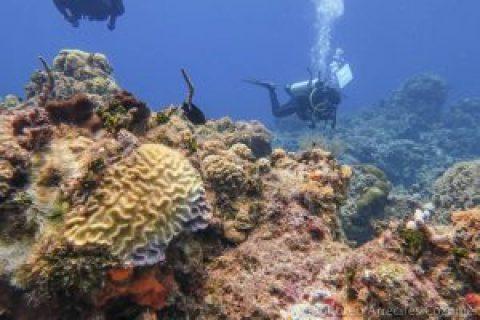 Cozumel Coral Reefs