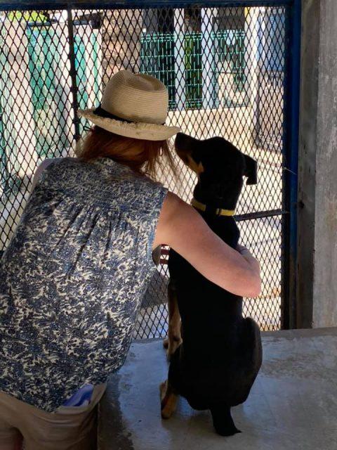 Humane Society of Cozumel Island