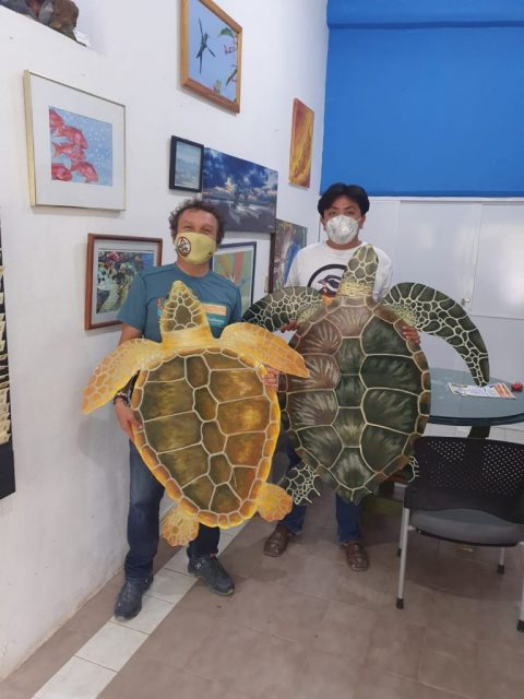 Cozumel Hurricane Grace Turtle Nesting Season